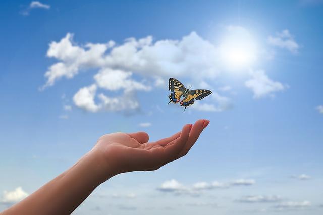 motýl nad rukou