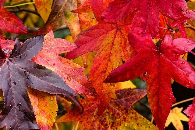 listy zbarvené podzimem